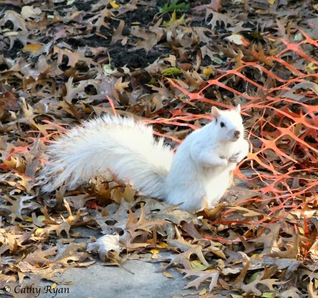 whitesquirrel3_Fotor