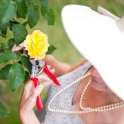 rosie gardening 02 facebook