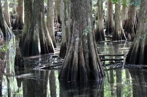 swamp-821666_640