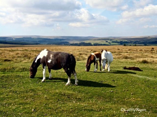 Dartmoor13