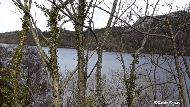 WaterBehindTrees