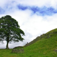 Sycamore Gap ~ DCI Ryan #2  @LJRoss_author #BookReview #FridayReads