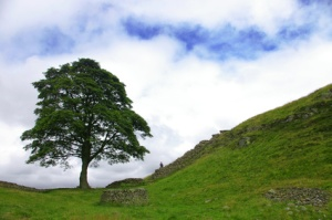 tree along hadrian's wall