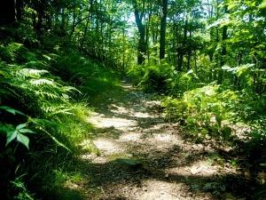 trail-50236_640