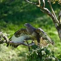 Workshop with #norfolkwildencounters #BirdsofPrey & Cambrian #Photography
