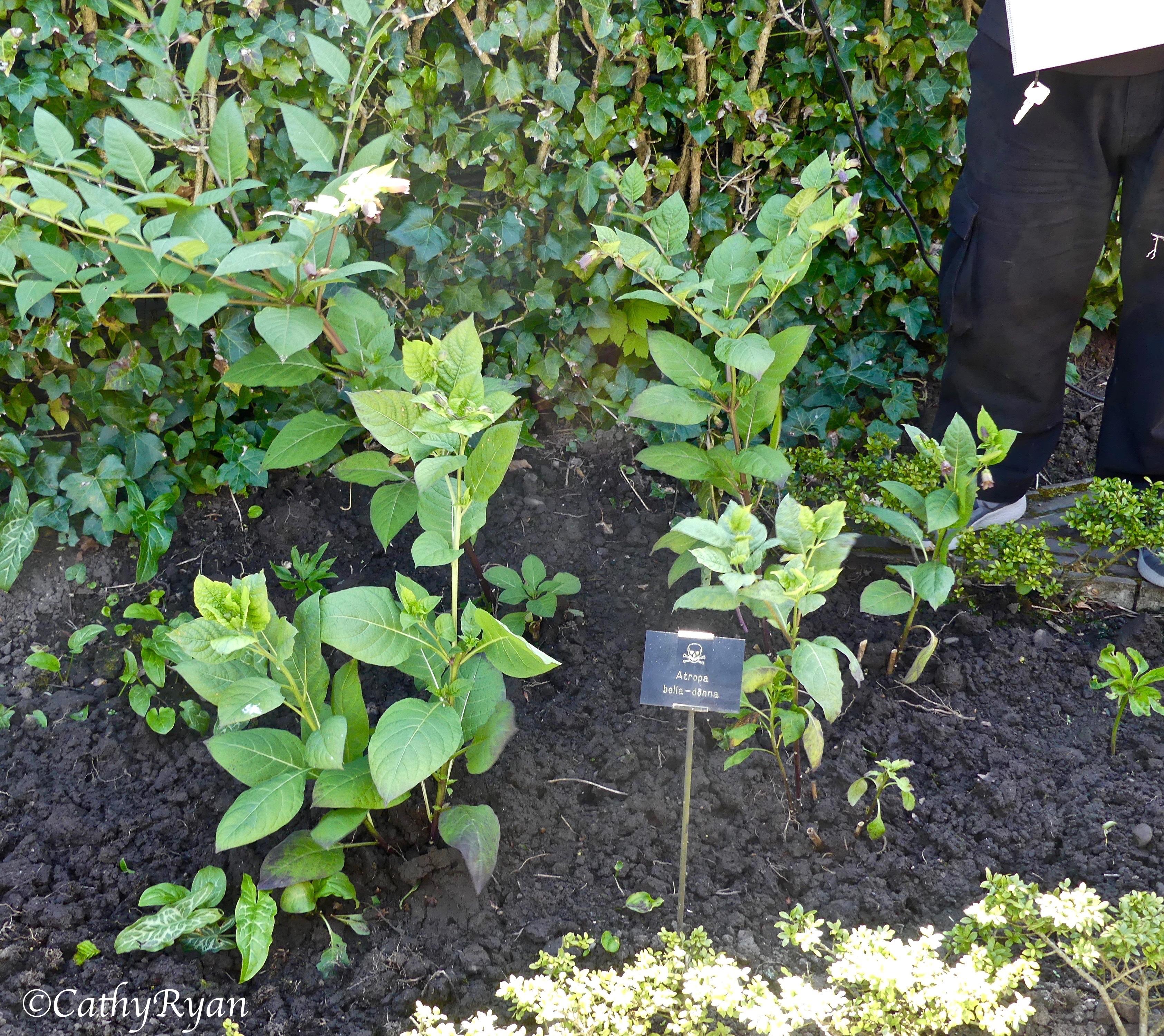 The Poison Garden Alnwick Castle Gardens Photography