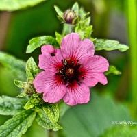 #SilentSunday Flowers #Photography