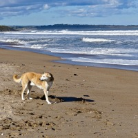 #WordlessWednesday ~ Warkworth's beautiful Beach #Ocean #Beach #Photography
