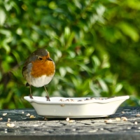 #WordlessWednesday ~ Feeding Time #Photography