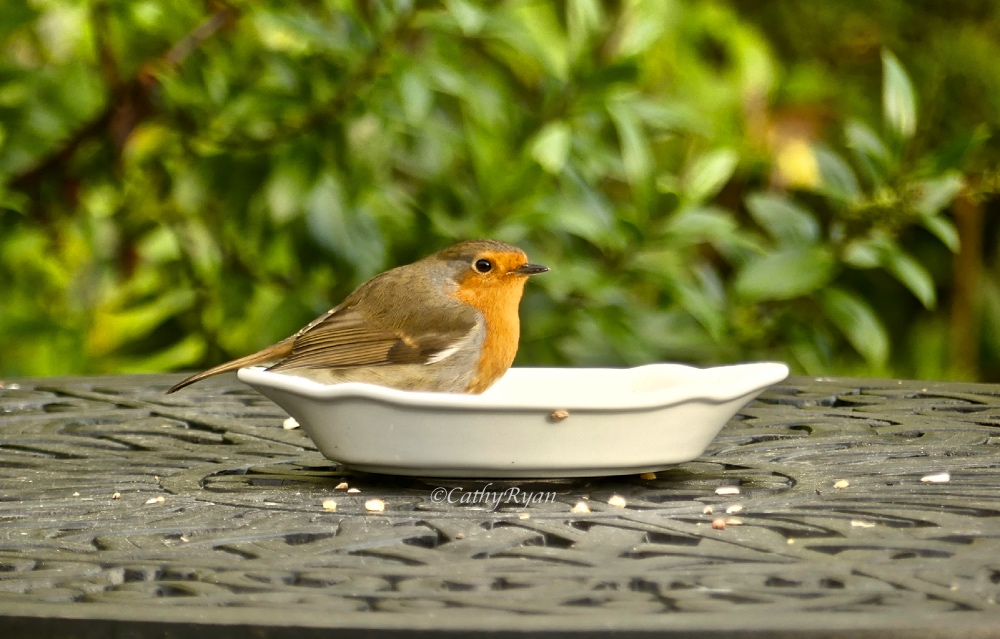 betweenthelinesbookblog.com - Cathy - #WordlessWednesday ~ Feeding Time #Photography