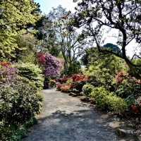 #WordlessWednesday ~ Bodnant Gardens #Photography #Flowers #Nature