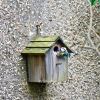 Blue Tits in the Nesting Box #Photography #Nature #Birds