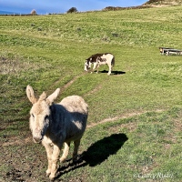 #WordlessWednesday ~ Meet the Neighbours #Photography #Donkeys
