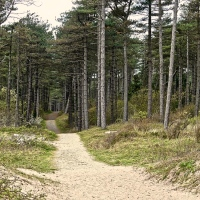 #WordlessWednesday ~ Newborough Forest and Beach #Photography #Nature