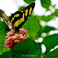 Visit to a Nature World Attraction that supports Butterfly Conservation #Nature #Butterfly #Photography