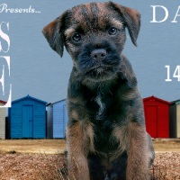 #BlogTour #Spotlight ~ Henry's Tale by David Pipe @dfpwriter @rararesources
