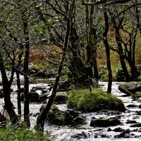 #WordlessWednesday ~ Woodland Walk #Nature #Photography