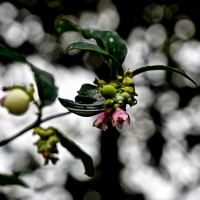 #WordlessWednesday ~ Flowers & Berries #Nature #Photography