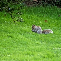 #WordlessWednesday ~ Now Where Did I Bury Those Acorns? #Nature #Wildlife #Photography