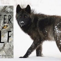 #BookReview ~ Winter of the Wolf by Martha Hunt Handler #Mystery #Spirituality #DebutNovel