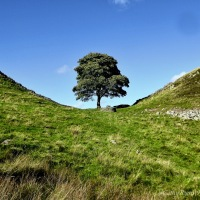 #SilentSunday ~ Sycamore Gap (part of Hadrian's Wall) #Photography #Nature #HadriansWall #Landscape