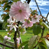 #SilentSunday ~ Last of the Blossom #flowers #blossom